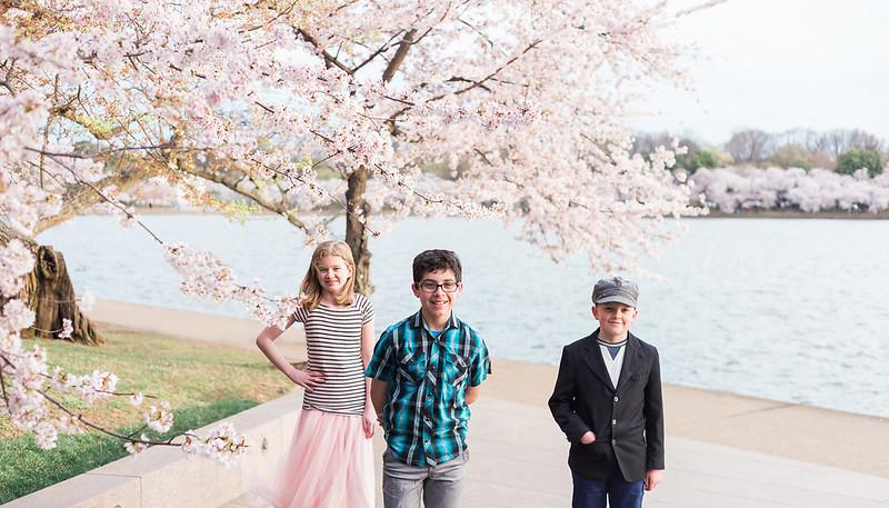 CherryBlossom-54.jpg