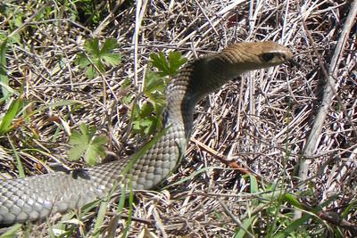 Australian Fauna