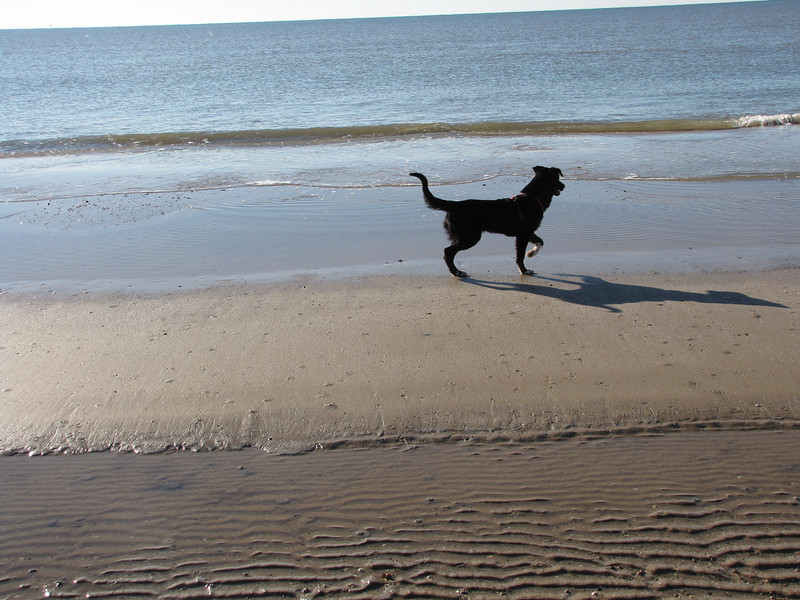 Now Toby decides she should fight the ocean--they are noisey rascally things that make a lot of noise and keep disappearing and reappearing somewhere else.