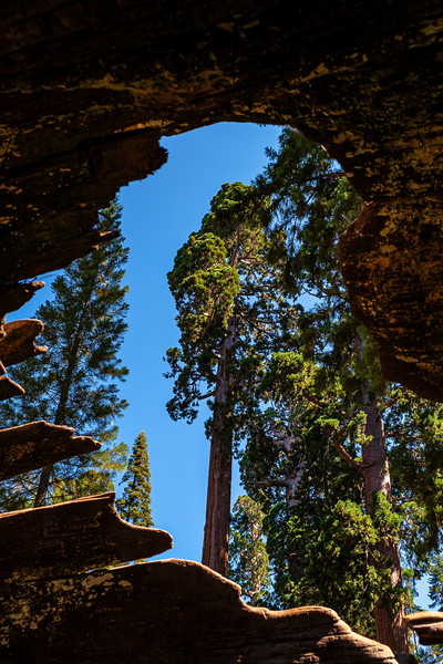 The Sequoia King