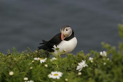 Shetlands 2014
