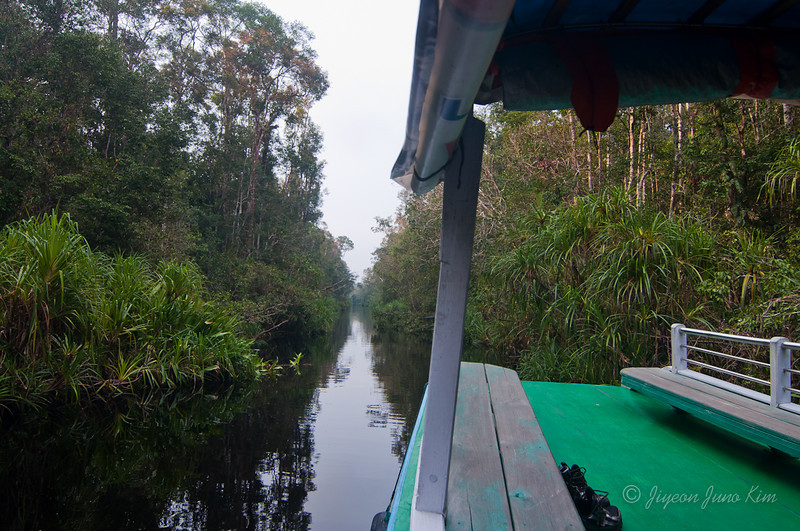 Borneo-jungle-7595.jpg