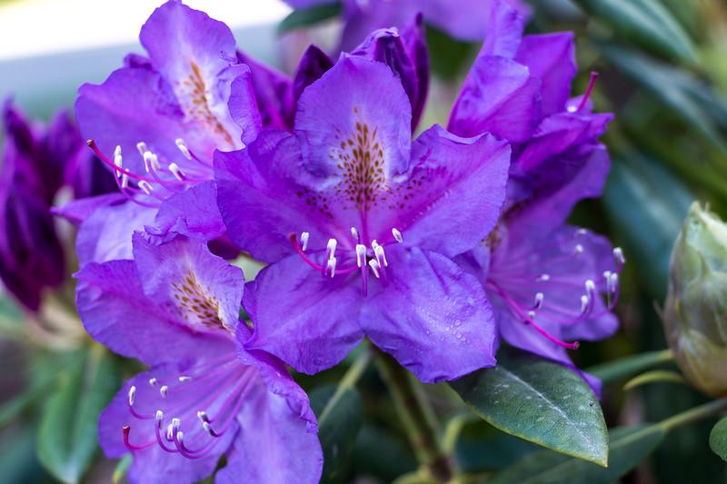 160520_02_6321_Flowers-1.jpg