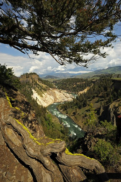 Yellowstone river valley in the summers