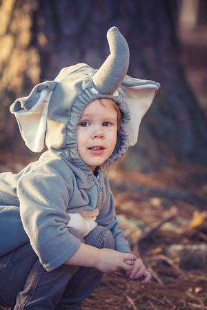 Elephant Dylan