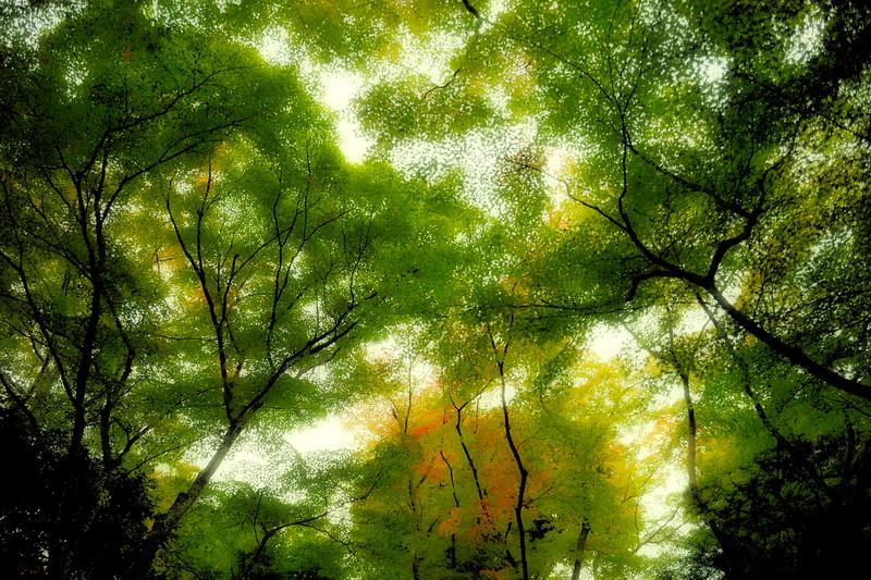 20081110_071_Upload.jpg