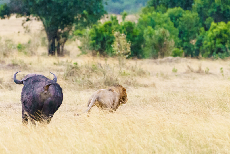 Kenya 2015-04997.jpg