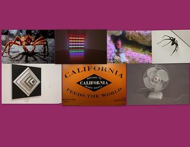 Monterey Bay Aquarium & SFMOMA & Oakland Museum of Art 02.2019