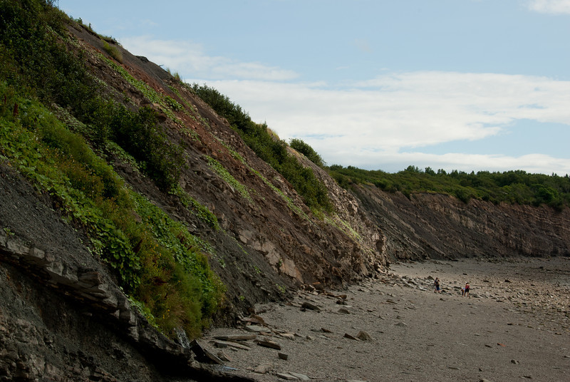 The Joggins Fossil Cliffs near Bay of Fundy in Nova Scotia