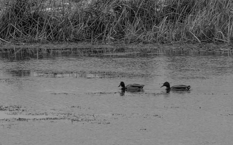 03-17-2021-goose-isl-1.jpg