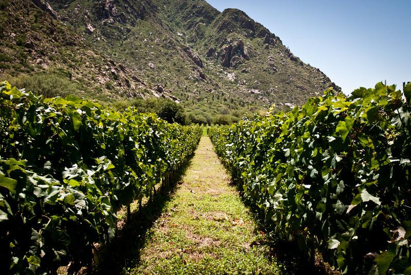 Cafayate 201202 Finca Las Nubes (32).jpg
