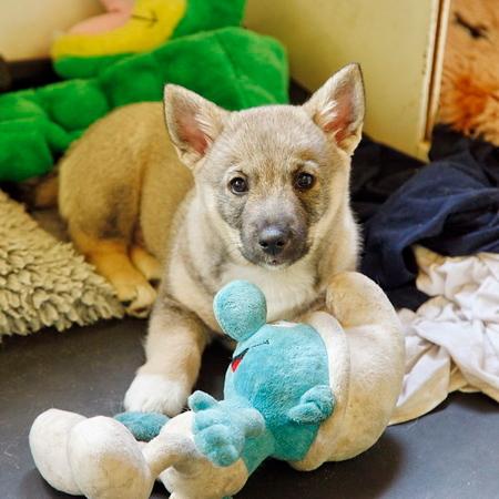 2013-06-29 5e Puppybezoek Markelo