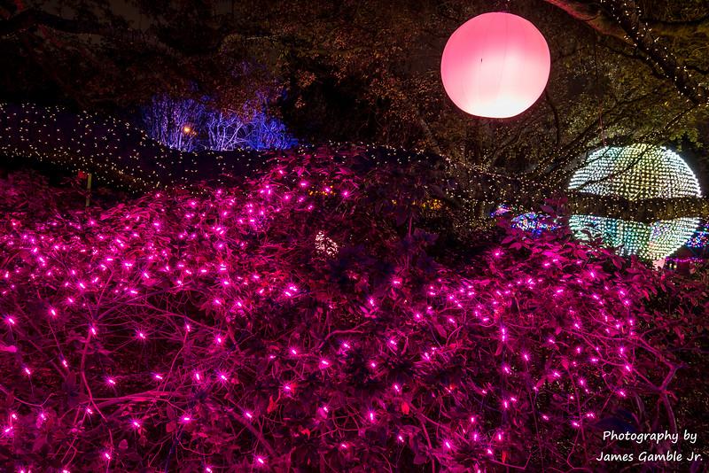 Houston-Zoo-Lights-3142.jpg