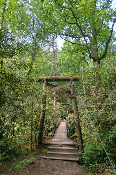 South Mills River/Bradley Creek Trail Junction -- 2,420'