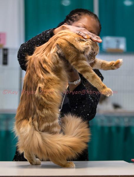 CatShow2014040_1.jpg