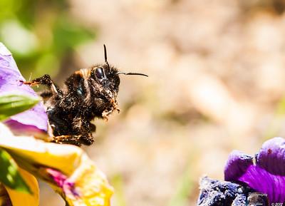 Bienen/Hummeln