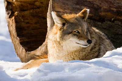 Wildlife - Published - V4