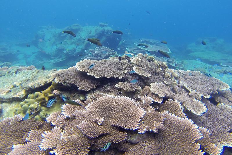 Snorkelling off Lang Tengah