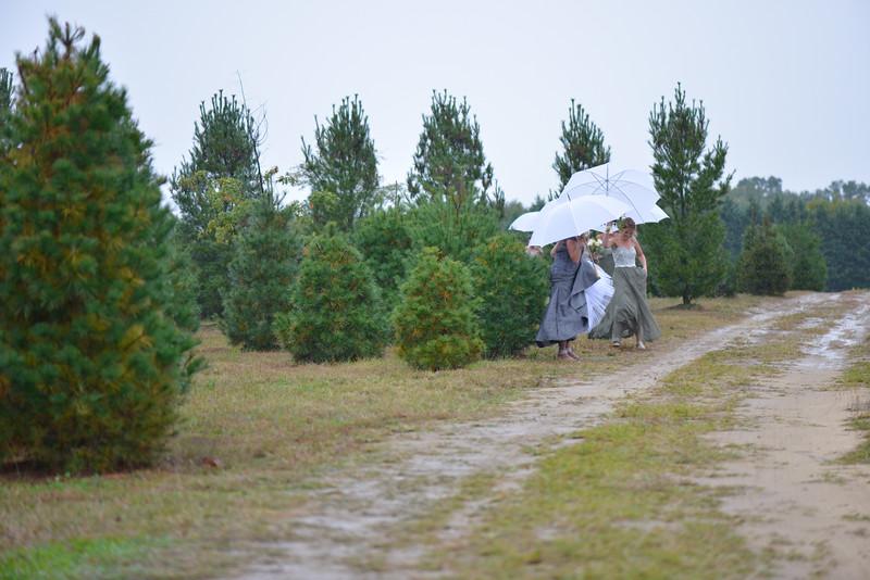 Jennings Tree Farm