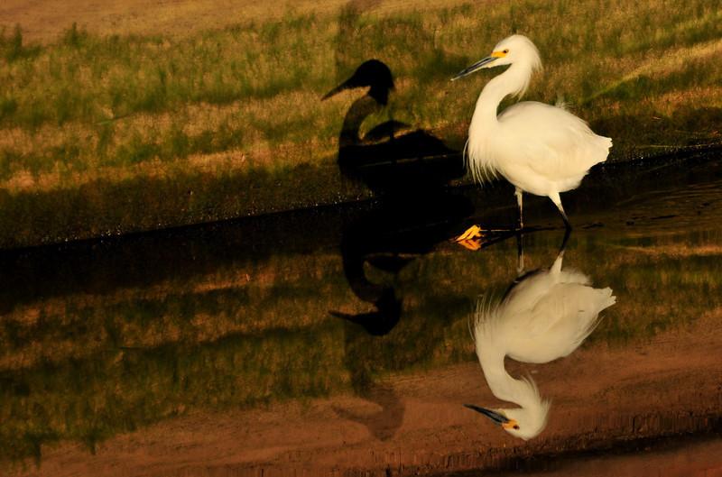 Arizona Day 7 11-07-2010 20.jpg