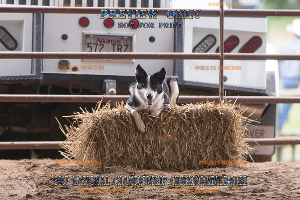 Bradford Cattledogs Demonstration