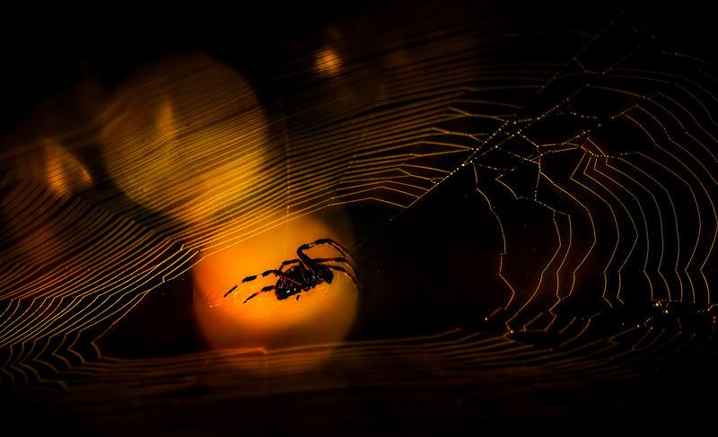 Spiders-Arachnids-141.jpg
