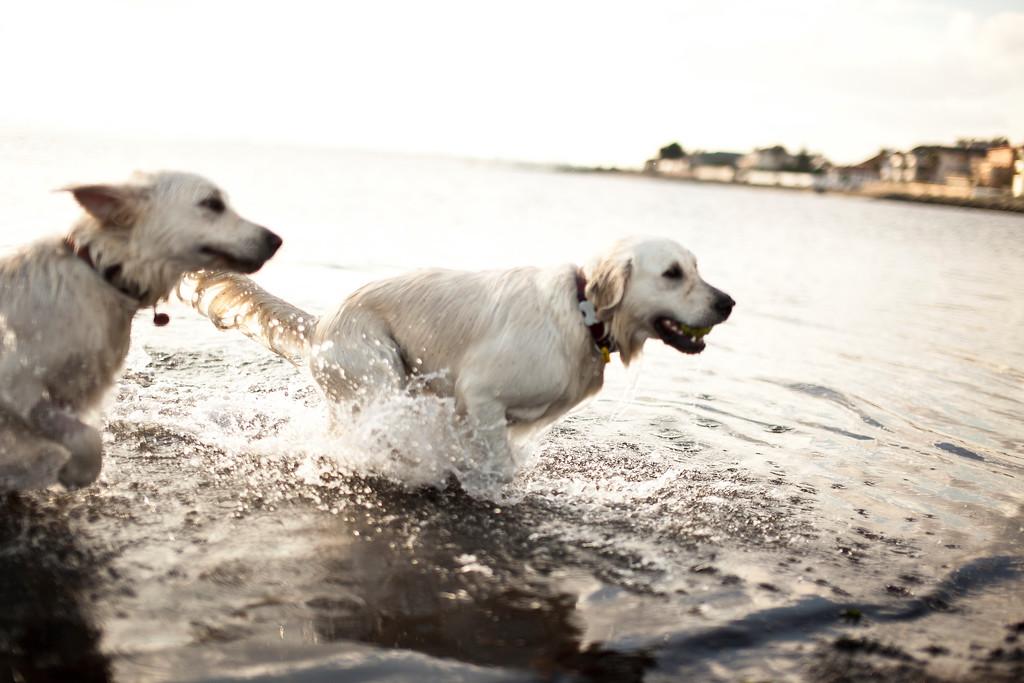 Dogsonbeach-AlexanderGardner-0009-20100614