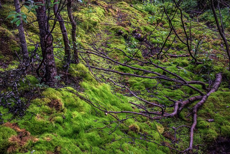 DSC_5410 Arboreal Forest NEF PS-.jpg.jpg