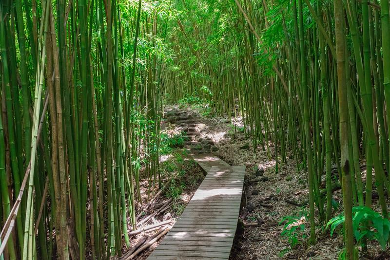 Pipiwai Bamboo Forest-86640.jpg