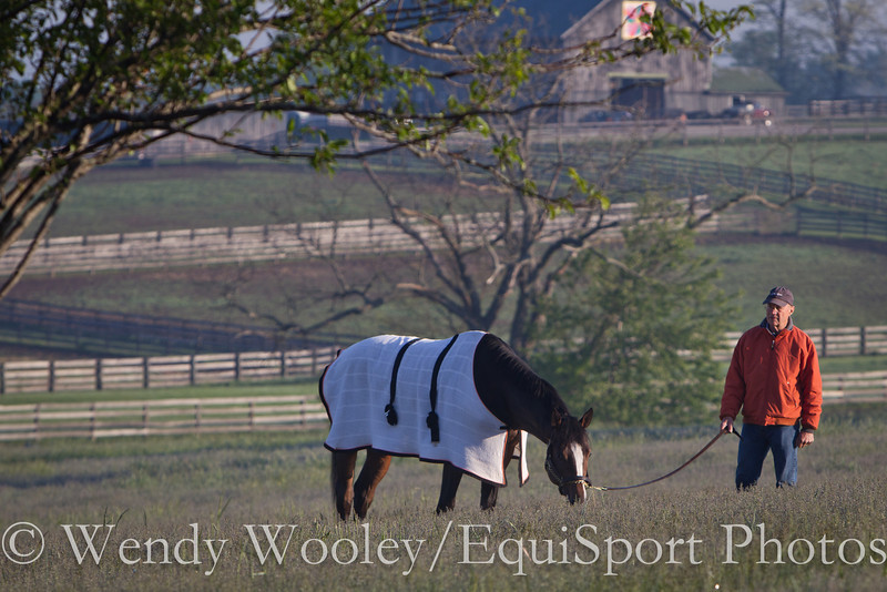 A horse at Keeneland out for a pick of grass.