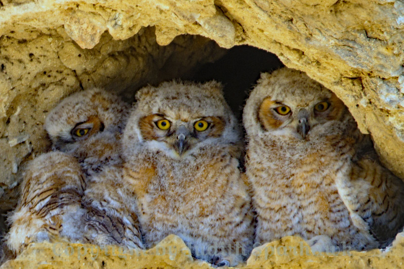 Little Owls Three