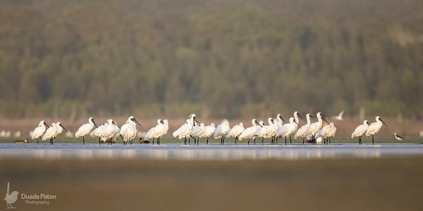 Lake Wollumboola 2018