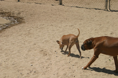 All Dogs Gym 7-16-2011