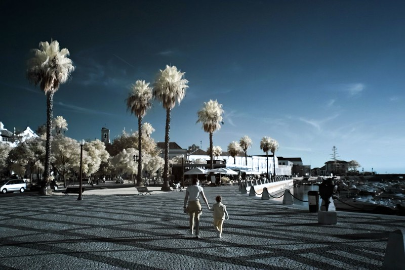 Palmy mě na infračervených snímcích vždycky fascinovaly