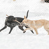 Dogs - Saturday, Feb. 7, 2015 - Frame: 3708