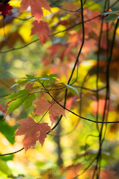 Himalayan Garden Oct 18-3.jpg