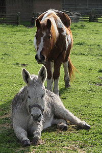 Dogs and Donkeys