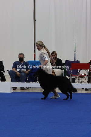 Dogs - Bred by Exhibitor