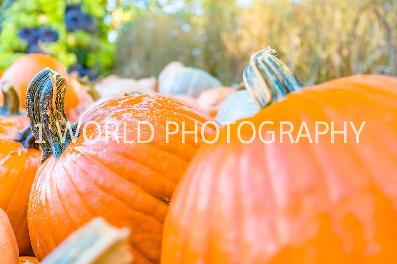 Morton Arboretum Fall 2017-20-8.jpg