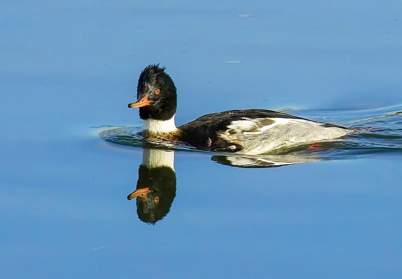 Ducks-5.jpg