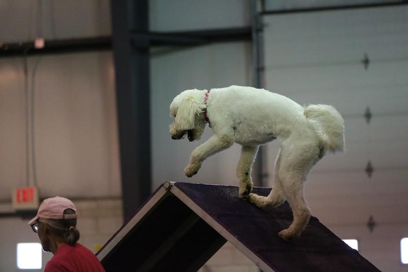 dogs_06142016-75.jpg