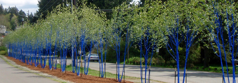 Blue Trees Of Kenmore