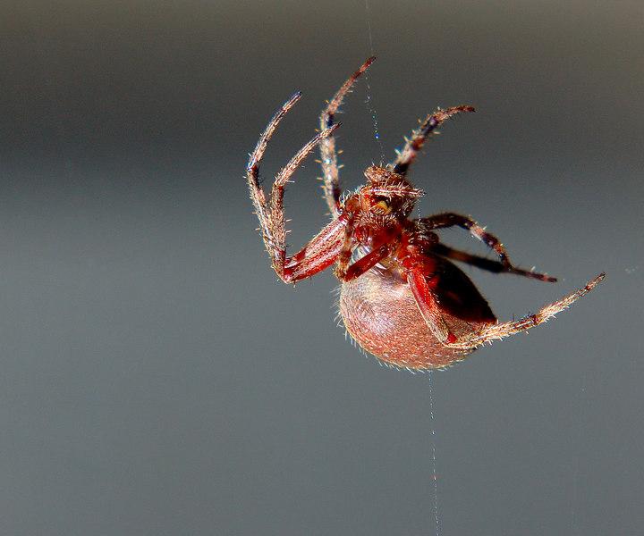 spider05.jpg
