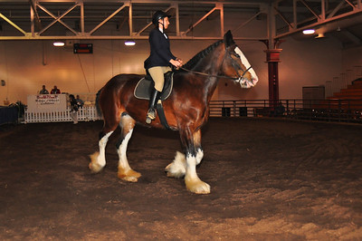 2011 National Clydesdale Sale