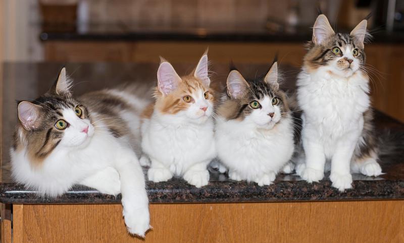 Kittens275.jpg