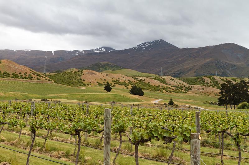 New Zealand - Peregrine Winery