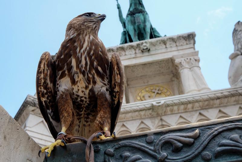 Budapest_Hungary-160701-52.jpg