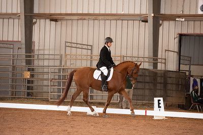 Horse 144