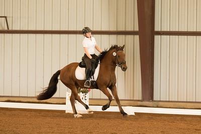 Horse 605