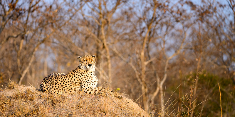 LeopardHills-20150825-1090.jpg